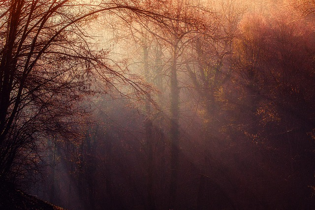 forest-1225983_640