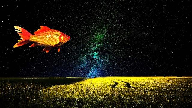 goldfish-1229772_640