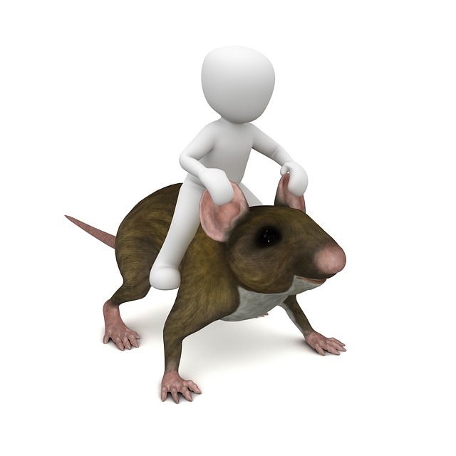 mouse-1027582_640