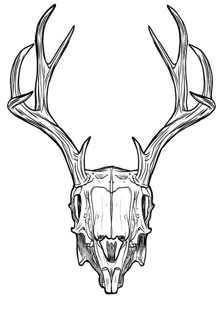 skull-1606166_640